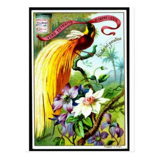 Retro Paradies-Vogel Postacard Postkarte