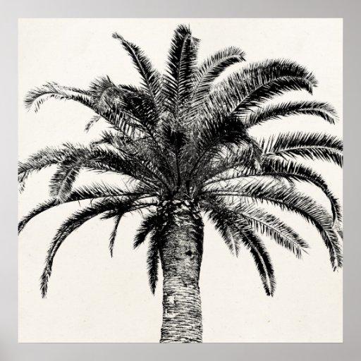 Retro tropische Insel-Palme in Schwarzweiss Posterdrucke