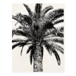 Retro tropische Insel-Palme in Schwarzweiss Postkarten