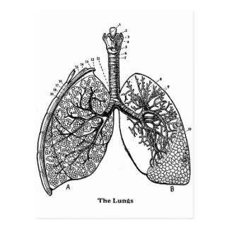 Retro Vintage Kitsch-Anatomie-medizinische Lungen Postkarte