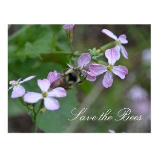 Retten Sie die Bienen….Rettich-Blumen Postkarte