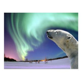Retten Sie die gefährdeten polaren Bären für Postkarte