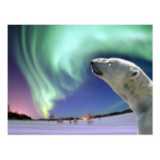 Retten Sie die gefährdeten polaren Bären für Weihn Postkarten