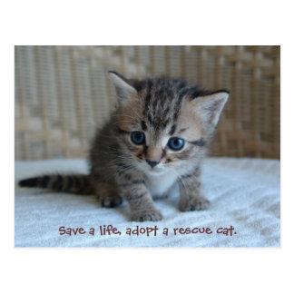 Retten Sie ein Leben, adoptieren Sie eine Rettungs Postkarten