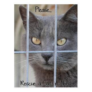 Retten Sie eine Katze im Bedarf Postkarte