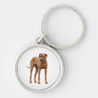 Rhodesian Ridgeback Hundeschönes Foto, Geschenk Schlüsselanhänger