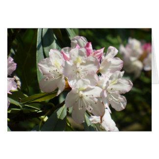 Rhododendren 172 karte