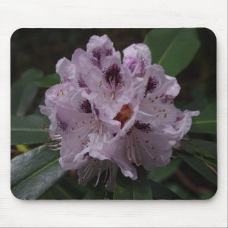 Rhododendron-Blume Mousepad