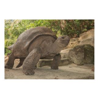 Riesige Aldabra Schildkröte Holzdruck