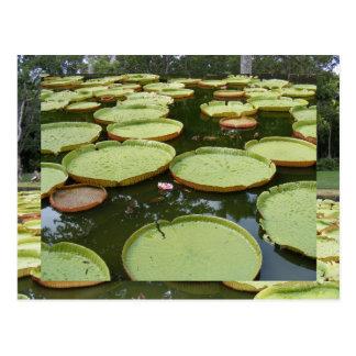 Riesige amazonische Wasser-Lilien Postkarte