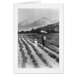 Riesige Früchte u. Veggies in Skagway 1916 Karte