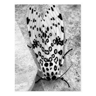 Riesige Leopard-Motte Postkarte