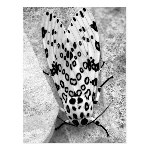 Riesige Leopard-Motte Postkarten