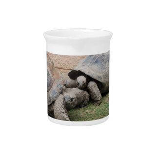 riesige Schildkröten Getränke Pitcher