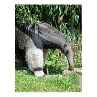 Riesiger Anteater-Postkarte Postkarte
