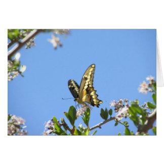 Riesiger Frack-Schmetterling Karte