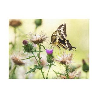 Riesiger Frack-Schmetterling Leinwanddruck