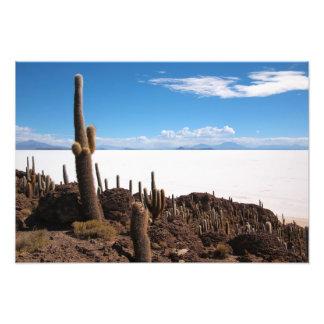 Riesiger Kaktus am Fotodruck Salars de Uyuni