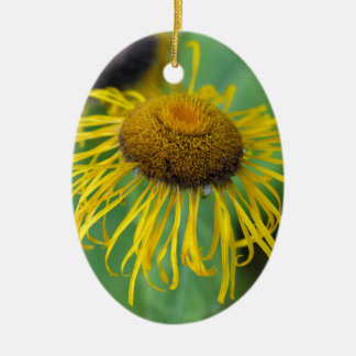 Riesiges Fleabane (Inula Magnifica) Ovales Keramik Ornament