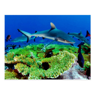 Riff-Haifisch-Fotos Postkarte