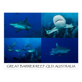 Riff-Haifische auf dem Great Barrier Reef Postkarte