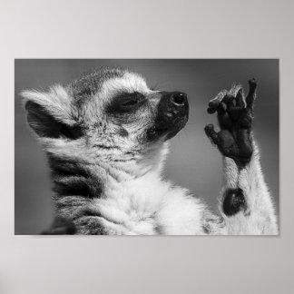 Ring angebundenes Lemur-Spielen Poster