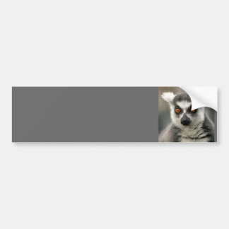 Ring-Schwanz Lemur Autoaufkleber