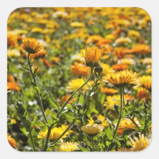 Ringelblume Calendula-Blumenfeld Quadrataufkleber