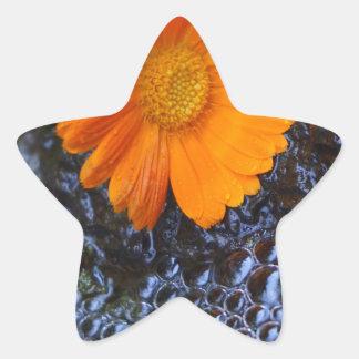 Ringelblume Stern-Aufkleber