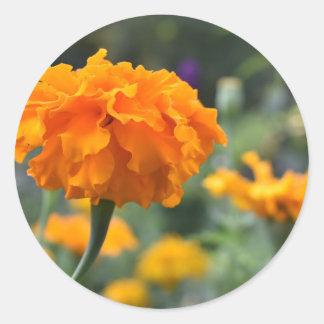 Ringelblumen-orange Blumen-Natur-Fotografie-Garten Runder Aufkleber