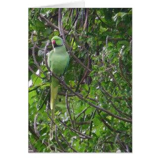 Ringnecked Parakeet Grußkarte