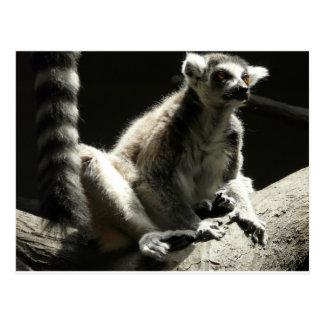 Ringtail Lemur Postkarte