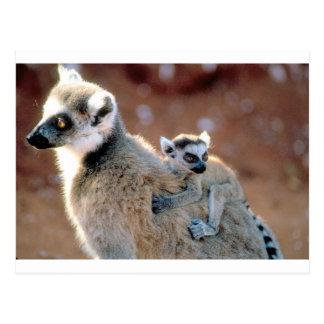 Ringtail-Lemur und Baby Postkarte