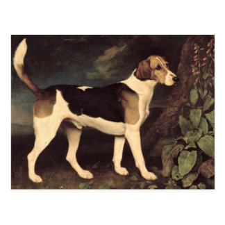 Ringwood, ein Brocklesby Foxhound, 1792 Postkarte