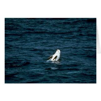Rissos Delphin Karte