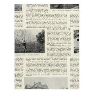 Riverdale Pflaumen-Obstgarten, Kalifornien Postkarte