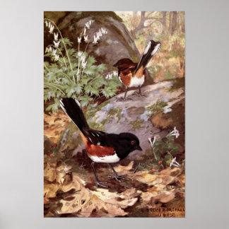 Robert Bruce Horsfall - Vintager gepunkteter Poster