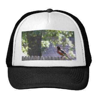 Robin auf einem Zaun Mütze
