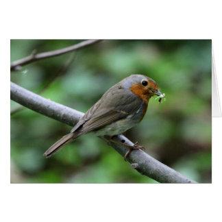Robin mit Wurm Karte