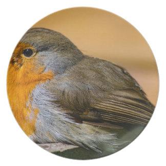 Robin-Rot-Brust Teller