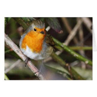 Robin-Vogel in der Baum-Gewohnheit Karte