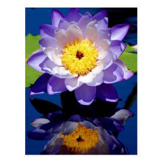 Robuste Wasserlilie Postkarte