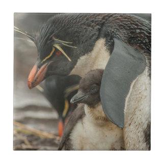 Rockhopper Pinguin und Küken Fliese
