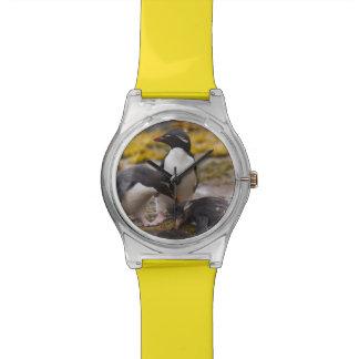 Rockhopper Pinguine verständigen sich mit einander Uhren