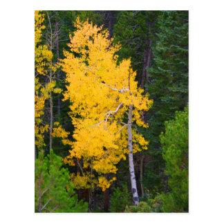 Rocky Mountain Nationalpark-Fall-Postkarte Postkarte