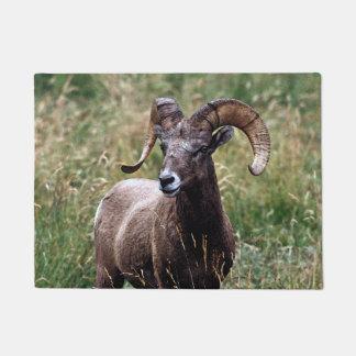 Rocky Mountains-Bighorn-Schafe Türmatte