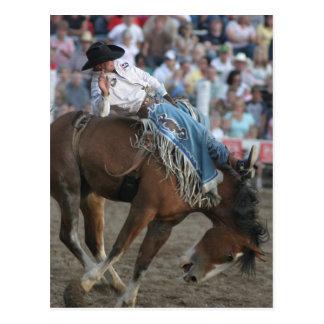 Rodeo-sträubendes wildes Pferd Postkarte