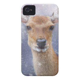 Rogenrotwild Case-Mate iPhone 4 Hülle
