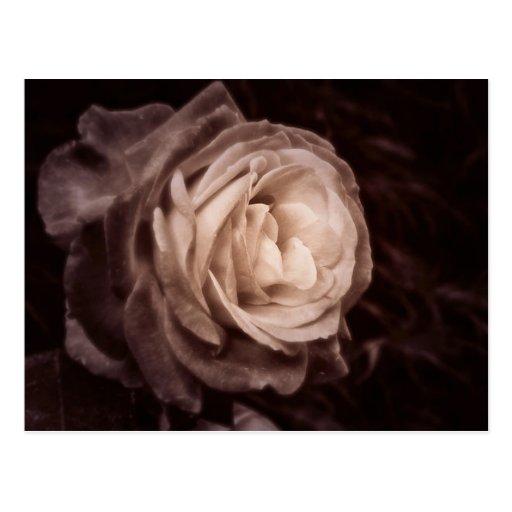 Romantica- diese Rose sagt Liebe Postkarte