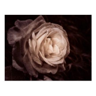 Romantica- diese Rose sagt Liebe Postkarten